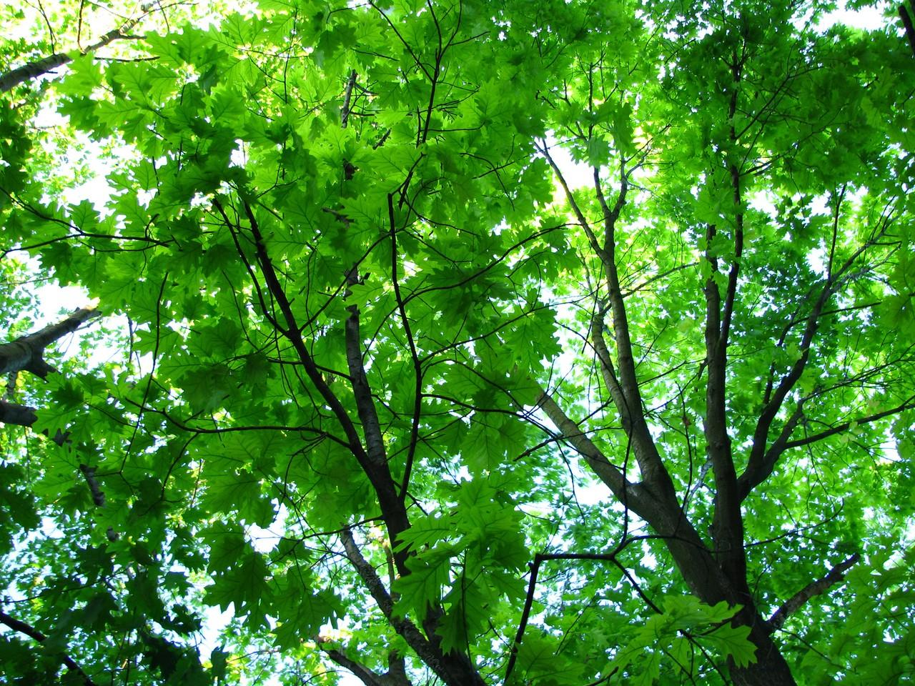 Mięso będzie rosło na drzewach?